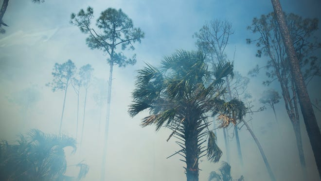 An interior fire picks up as rangers strengthen the containment lines during the Greenway Fire in Picayune Strand State Forest on Monday, March 26, 2018.