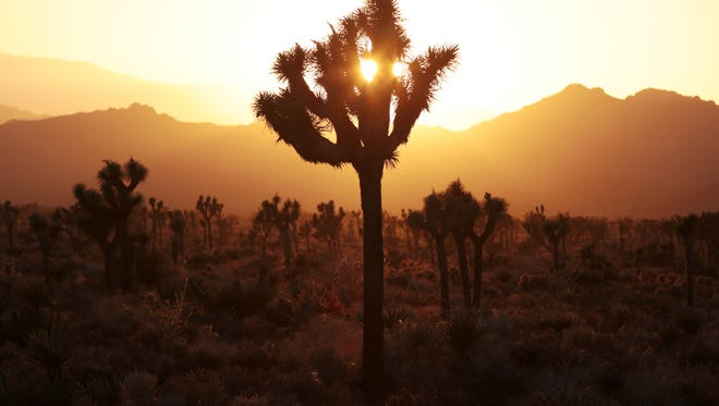 The sun sets at Joshua Tree National Park in May.