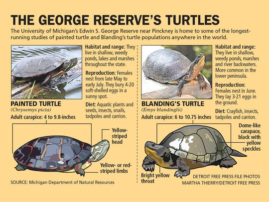 The George Reserve's turtles