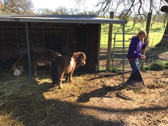 Chic Miller of Bella Vista Farms in Igo cleans out