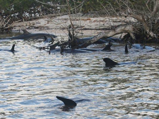 636204272379712541-Everglades-Dolphins-S-Keom.jpg
