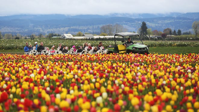The Wooden Shoe Tulip Festival is offering several events this week.