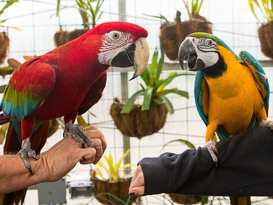 Parrots are not allowed in restaurants in Buncombe County, according to the Buncombe County Health & Human Services Department. Diners brought parrots similar to these into a West Asheville restaurant while people were eating.