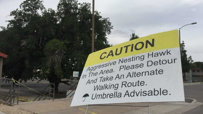 A sign warns passersby of aggressive hawks near Rentfrow Hall on Friday, June 29, 2018. Surrounding parking lots have been closed temporarily.