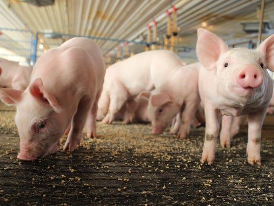 Purina Mat Feeding Piglets