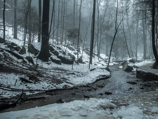 Foggy Forest Stream In Winter