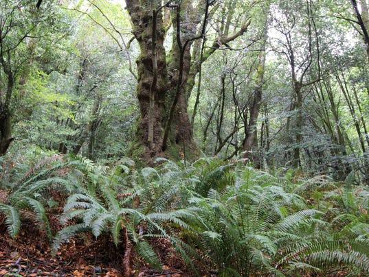636426558717567904-Big-Tree1.jpg