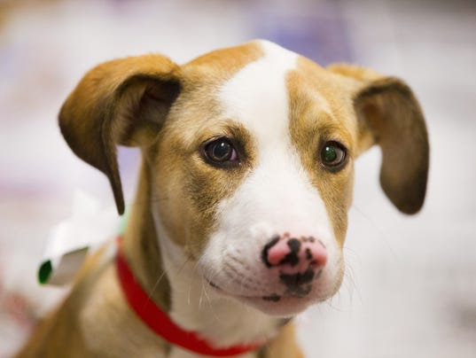 Maricopa County Animal Care and Control
