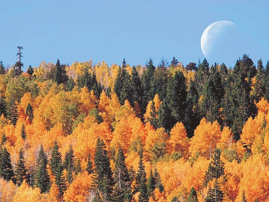 Fall color and the moon as seen in Hope Valley, Calif.,