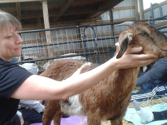 MTO hug a goat - Jolene and goat