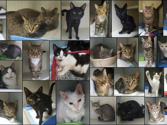 636059146495789761-LAN-cats-0804.jpg