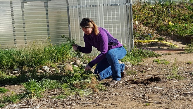 Hand-pulling weeds and hand-picking pests are part of integrated pest control.