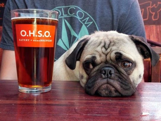 A pug eyes a beer at OHSO Eatery and Nanobrewery in