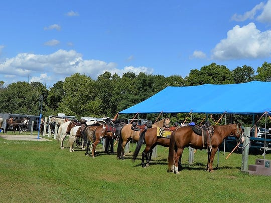 Horses awaiting their riders for the group trail ride at SKMHTA's Annual Fall Roundup held at Horseriders Campground in Palmyra.