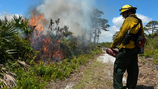 Members of Florida Department of Environmental Protection conducted a prescribed burn Friday, May 4, 2018, at Johnathan Dickinson State Park in Hobe Sound. A prescribed burn is set for the week of July 9, 2018, at the Hawk's Nest Golf Club at The Moorings in Indian River County.