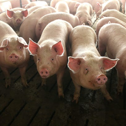 How neighbors can stop hog confinements from spreading