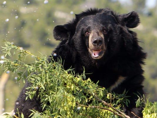FRANCE-BEAR