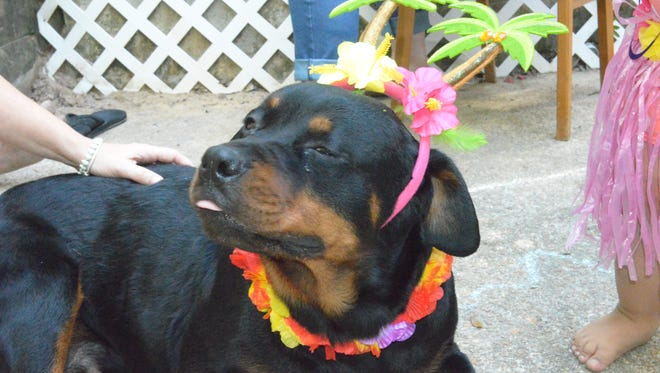 Cali, a 12-year-old Rottweiler, was shot and killed Saturday by a Tallahassee Police officer.