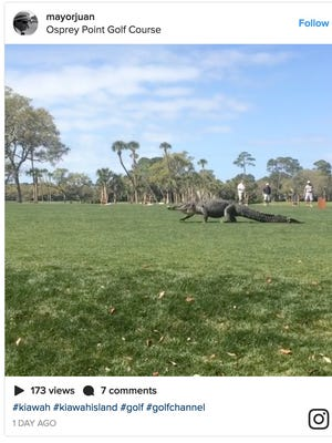 Instagram user @mayorjuan took a video of a massive alligator a South Carolina golf course on Monday.