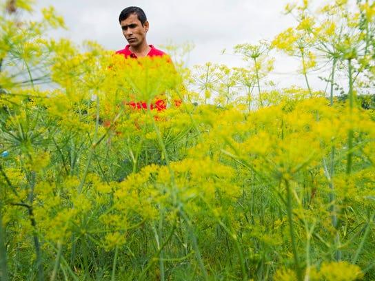 BUR 0826 gardens c8.jpg