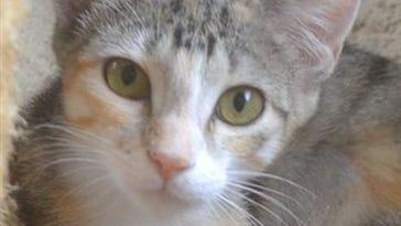 Feral cats creating havoc in Shreveport