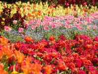 MAY FLOWERS: Stock up Extravaganza!
