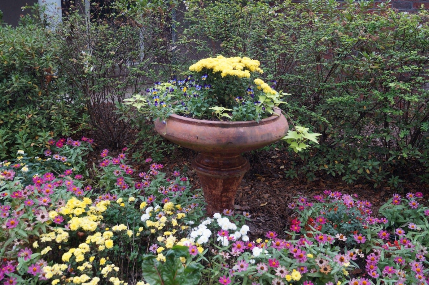 Choose Plants That Will Thrive In The Selected Area.