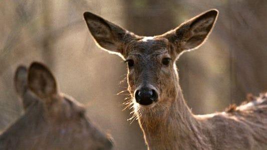 Leftover antlerless deer licenses go on sale Sept. 5.
