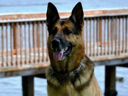 Cody, Stuart Police K-9