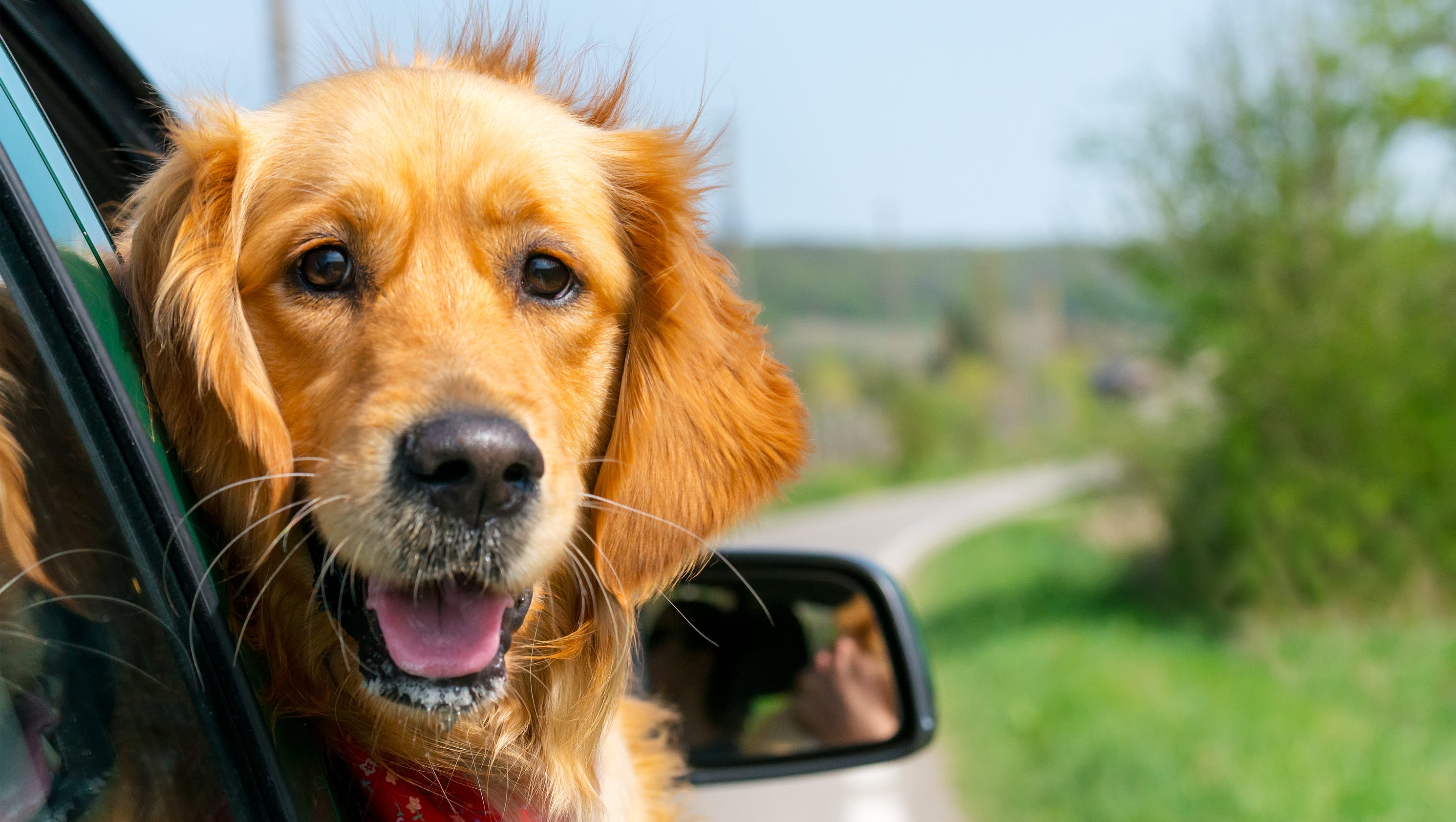 Here are the best new vehicles for traveling with dogs for Best dogs for you