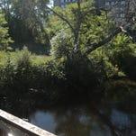 Boardman River in downtown Traverse City.