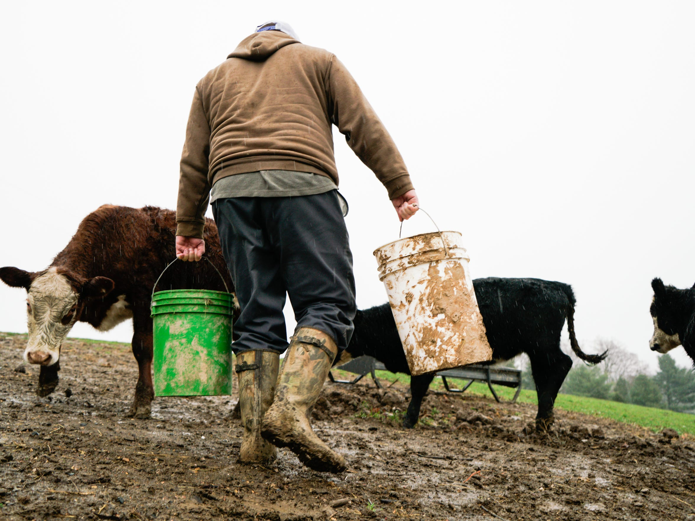 Donald Smith carries feed out to his beef cattle in