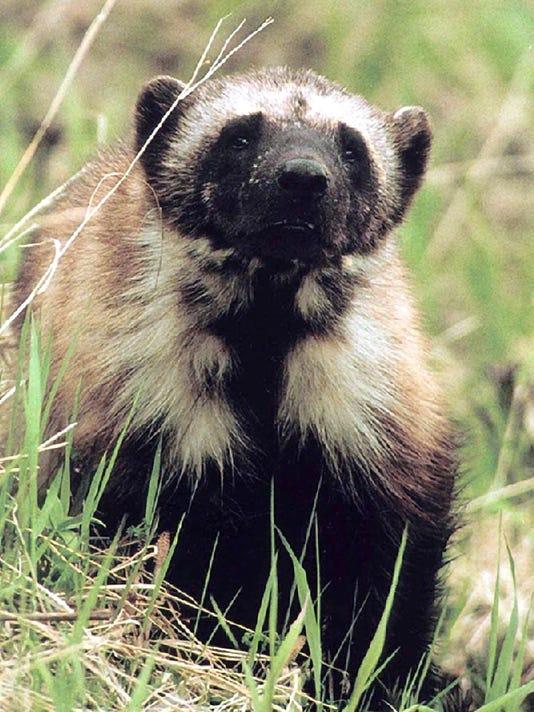-Endangered Species_Uda.jpg_20110510.jpg