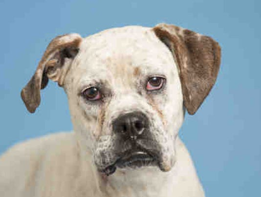 Freckles Arizona Humane Society