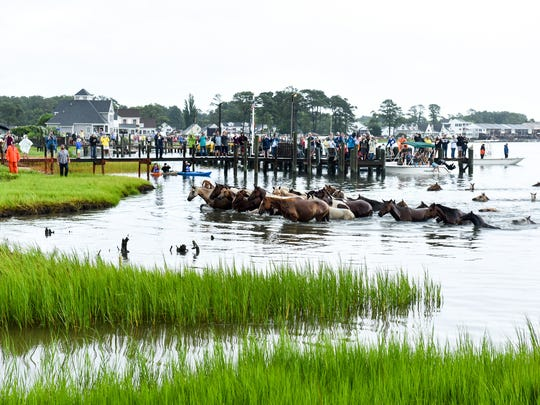 Ponies reach the shore of the Assateague Channel at