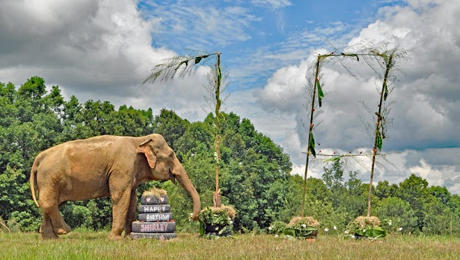 Shirley celebrated her 70th birthday on July 6, 2018, at The Elephant Sanctuary in Tennessee.