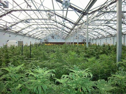 636143791365752879-greenhouse.JPG