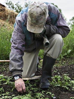 Man with cap weeding