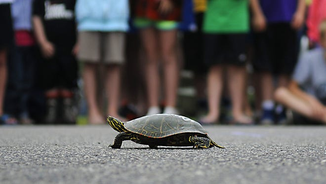 Children wait patiently as their turtles make their way towards the finish line at the 2015 Avon Spunktacular Days festival.