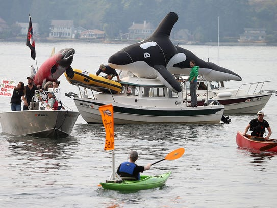 An orca and salmon decorate boats during a protest