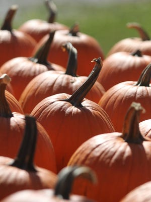 Pumpkins are on display at North River Adventures on Oct. 3, 2015.