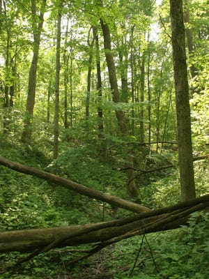 View of the wooded area near one of the campsites in the camping area at Turkey Run State Park in Parke County.