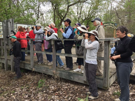 A crowd of people watch birds at Magee Marsh Wildlife Area.
