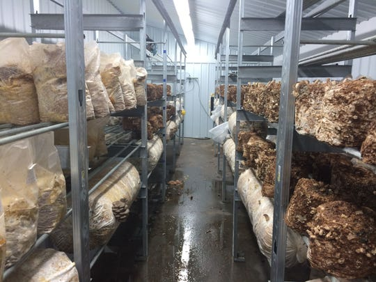 Inside one of the growing rooms at Fiery Fungi in Pelham, Tenn.