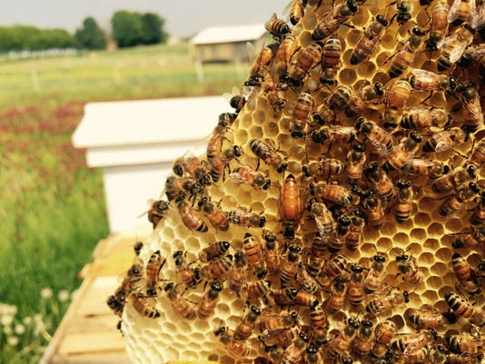 Daily Record Bees Rodale Queen