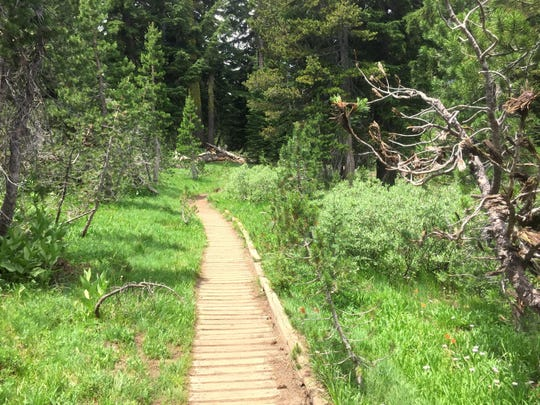 This boardwalk goes through a mountain meadow on the way to Lake Aloha.