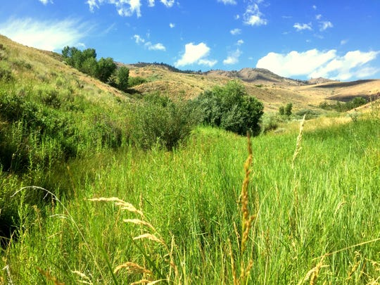 A riparian area in the hills of west Reno.