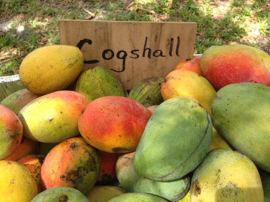 Mangoes for sale in the front yard of a home on Pine Island.
