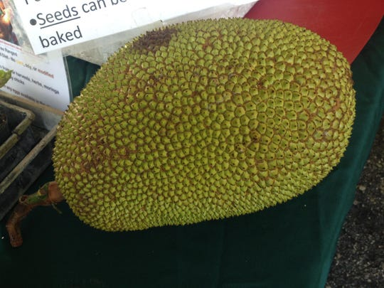 A whole jackfruit waits to be cut and then sold in sections at the Pine Island Botanicals booth at the Downtown Fort Myers Farmers Market.