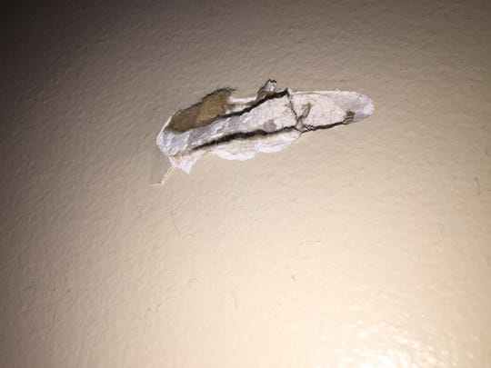 The bullet that was fired into Shameka Jordan's home Saturday tore into her living room wall, where it remains lodged.